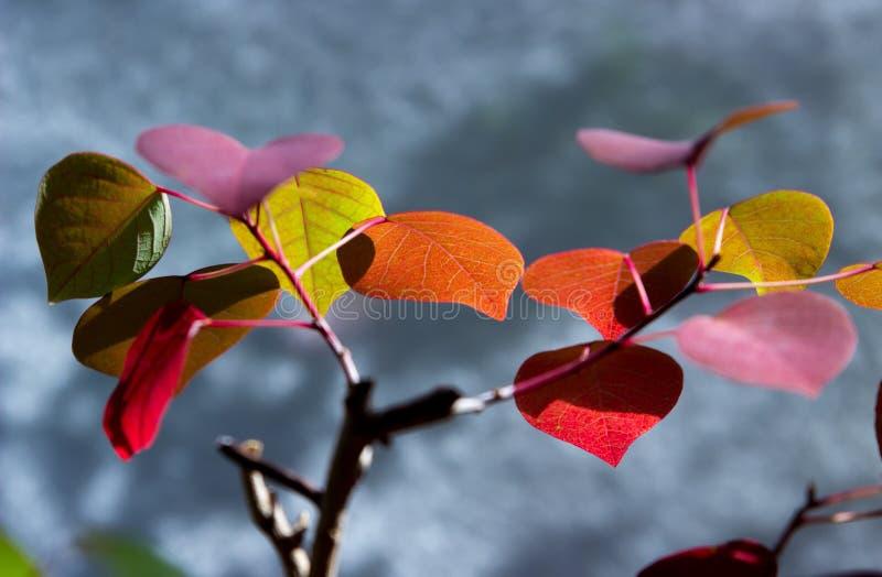 Nature, Leaf, Flora, Flower Free Public Domain Cc0 Image