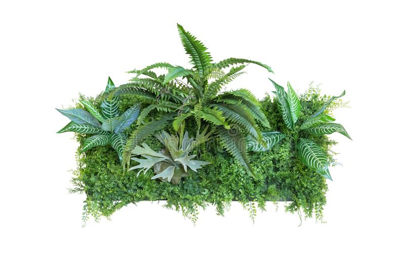 Nature leaves green of fern background, clipping path included stock image