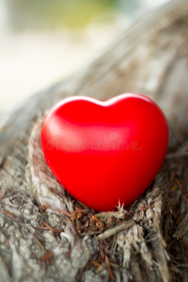Nature Love. Concept With Tree Body And Heart Shape stock photography