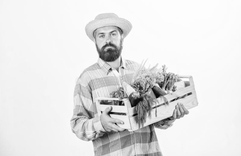 Nature lover. harvest festival. bearded mature farmer. seasonal vitamin food. Useful fruit and vegetable. organic and. Natural food. happy halloween. man chef stock images