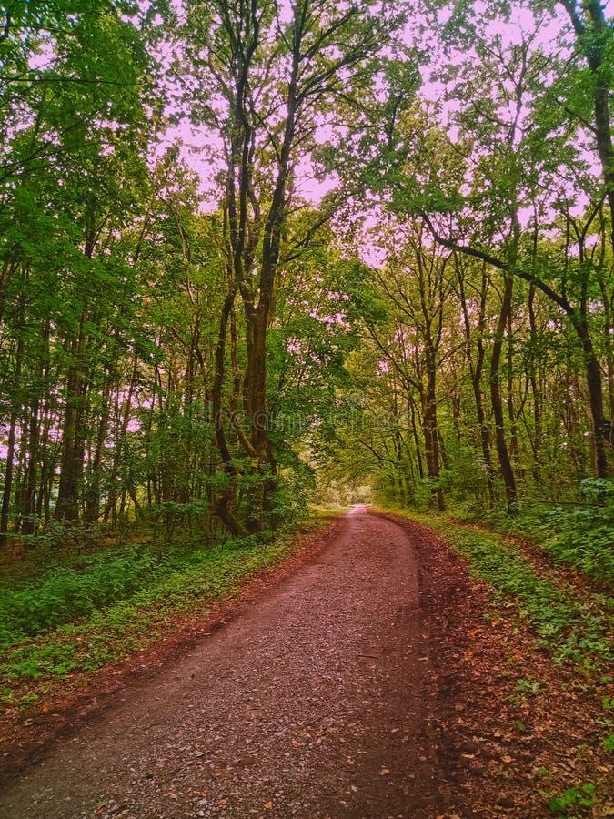 Nature path stock image