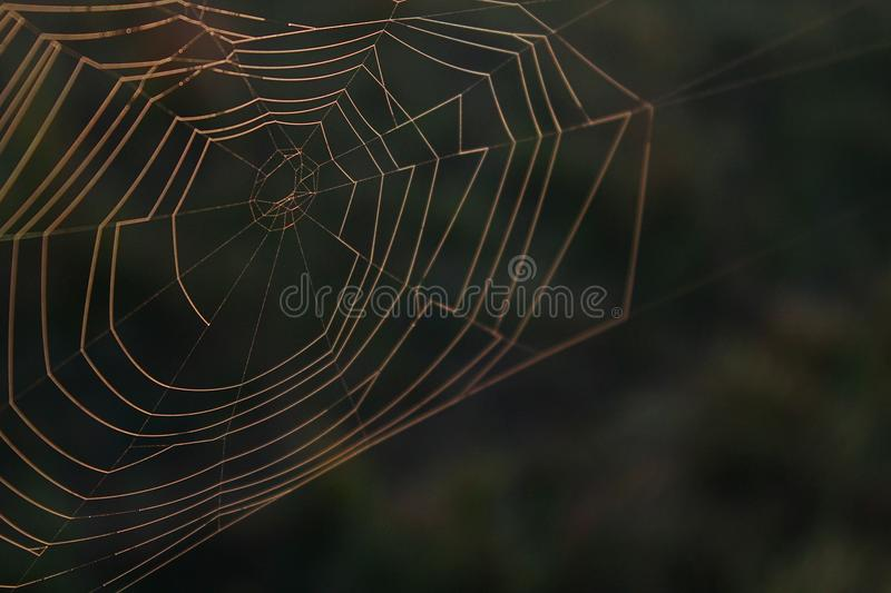 Nature Macro Photography of a Natural Spider Web. Nature Macro Photography of a Natural Spider Web in the Early Morning stock images