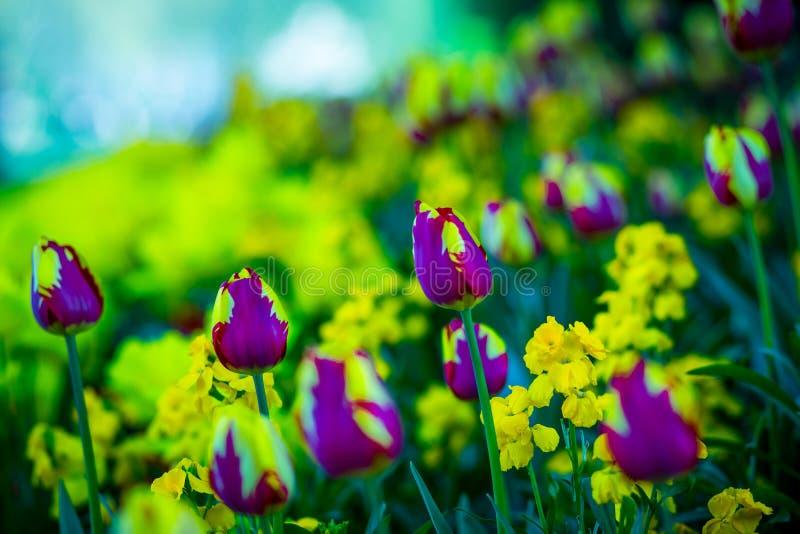 Nature magique de lillies images libres de droits