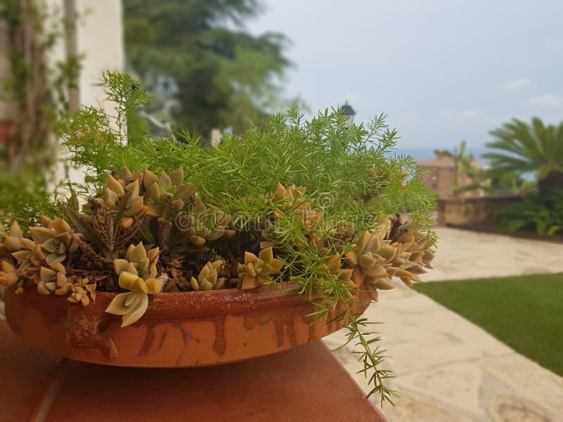 Nature at miniatures royalty free stock photo