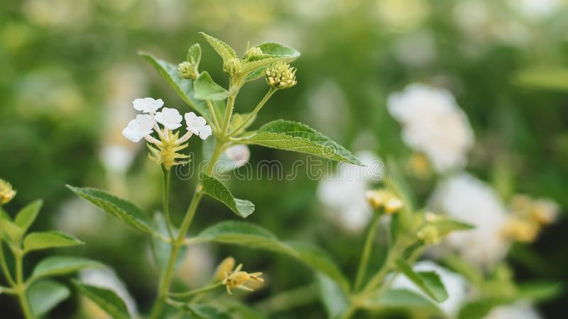 Green Leaves Background with small little white flower stock image