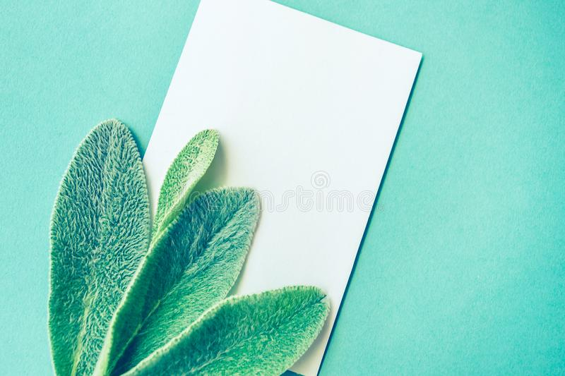 Nature minimalist lifestyle composition, delicate green leaves, blank white card, on blue paper background. A concept of minimalist lifestyle composition royalty free stock photography