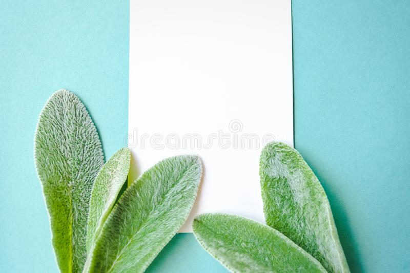 Nature minimalist lifestyle composition, delicate green leaves, blank white pages, on blue paper background. A concept of minimalist lifestyle composition royalty free stock image