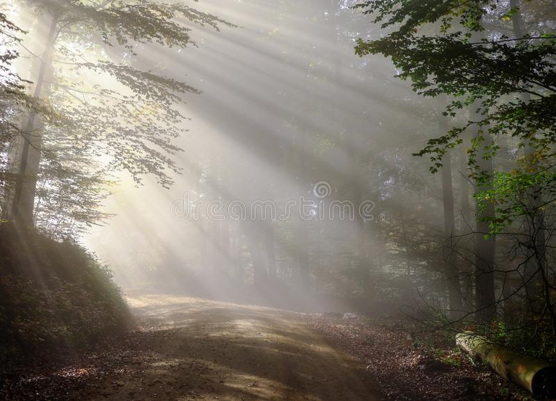 Nature, Mist, Forest, Tree stock photography
