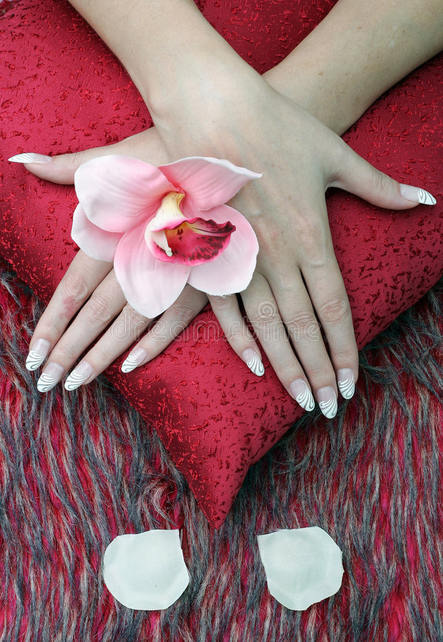 Nature morte with woman's hands and flowers stock images
