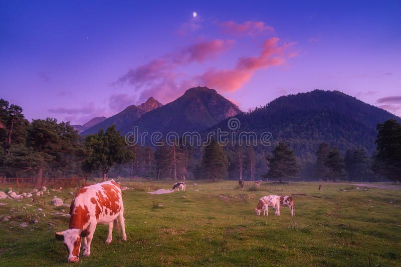 Nature mountains landscape at evening stock images