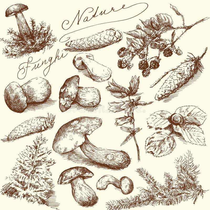 Nature - mushrooms vector illustration