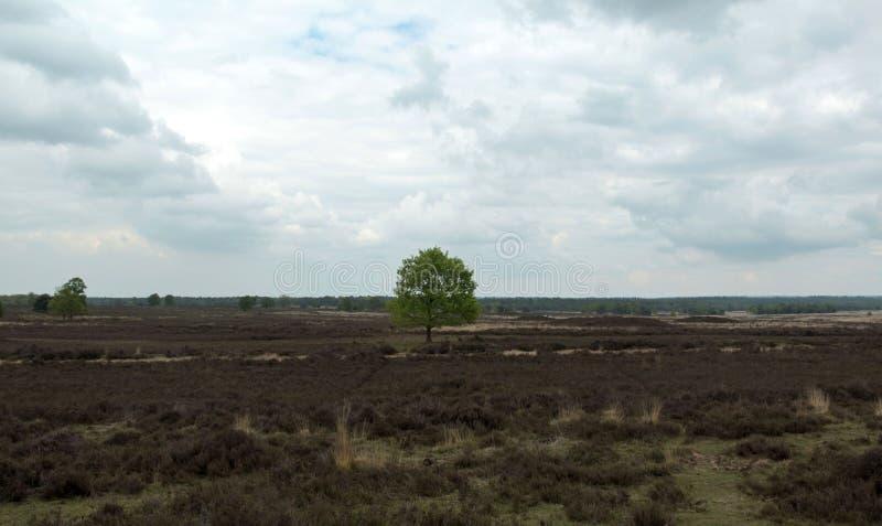 Nature néerlandaise typique une journée de printemps images stock