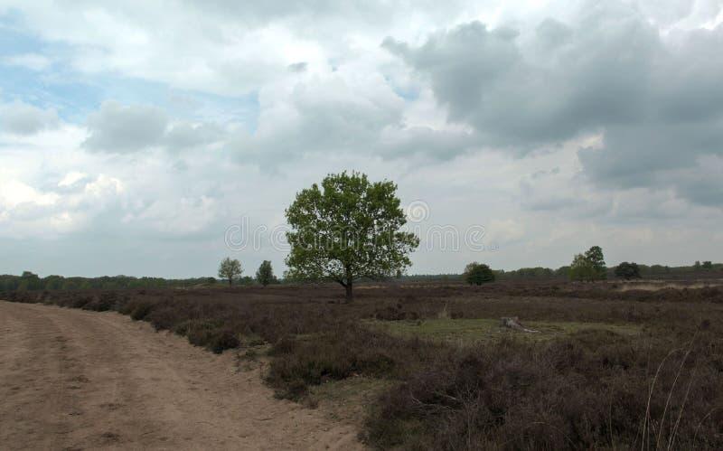 Nature néerlandaise typique une journée de printemps photo libre de droits