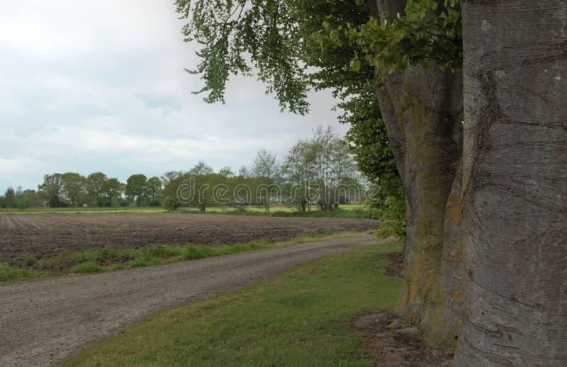 Nature néerlandaise typique une journée de printemps photos libres de droits
