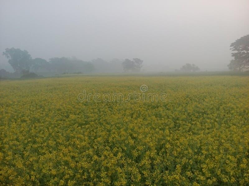 Nature. The natural beauty of bangladesh winter morning stock photos