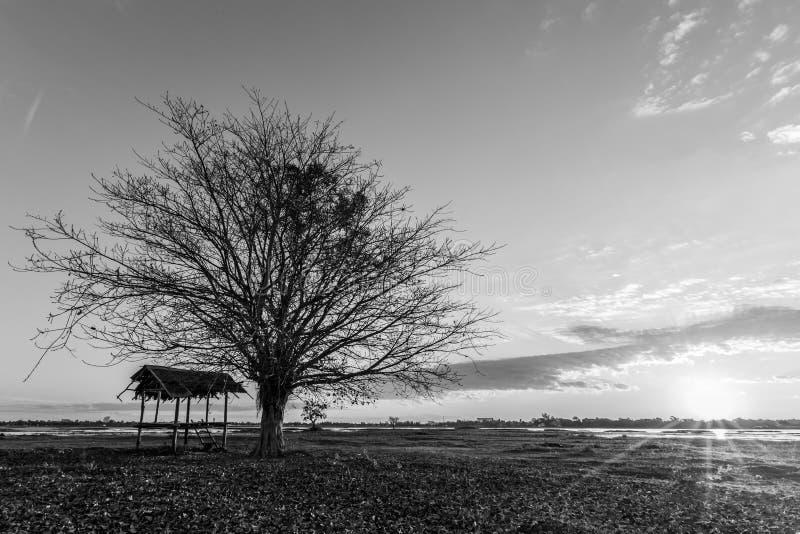 Nature noire de paysage de détail d'aube d'arbres photos libres de droits