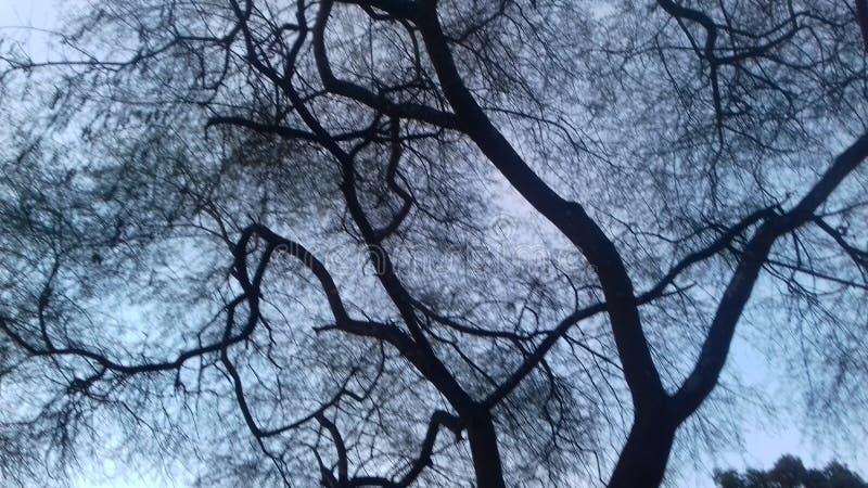 Nature noire et blanche photographie stock libre de droits