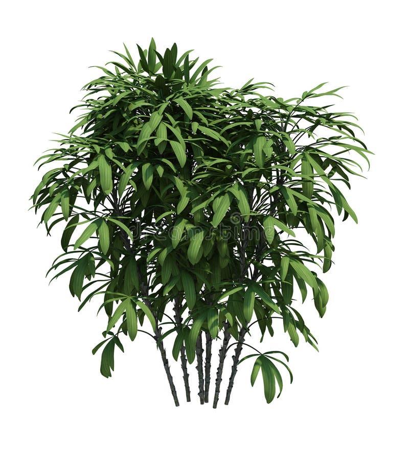 Nature object bush  tree isolated  white background stock image