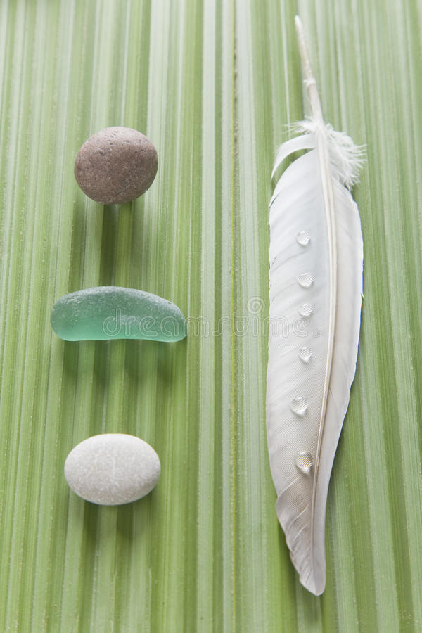 Download Nature on a palm leaf stock image. Image of feather, water - 19079055
