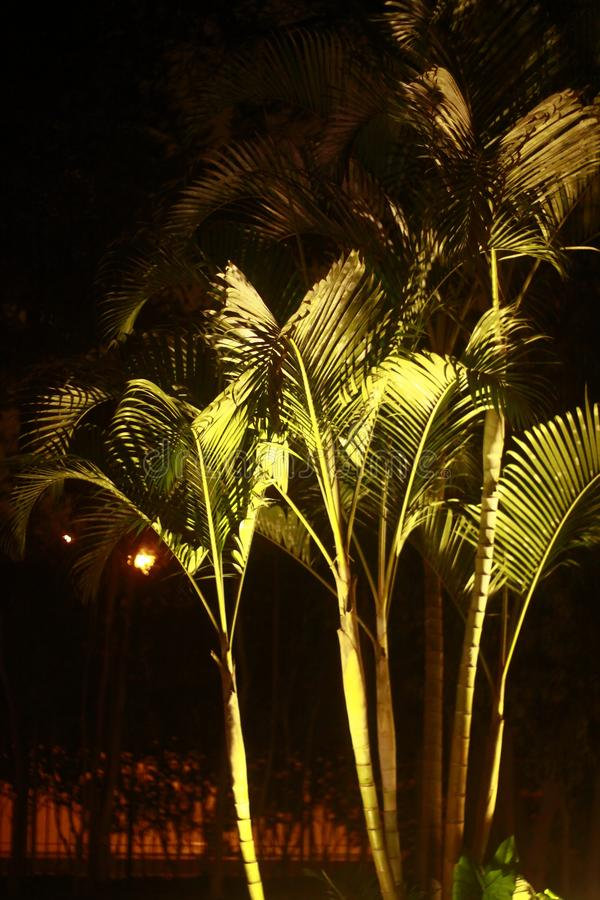 Nature, Palm Tree, Arecales, Night stock photography