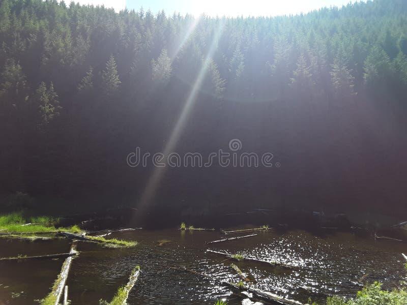Nature& x27; pantano hermoso de s en el lado de la montaña fotografía de archivo