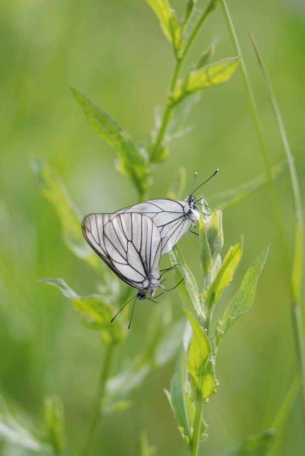 Nature, papillons, beauté, inspiration, insectes, amour, romance, été, herbe, verte photo stock