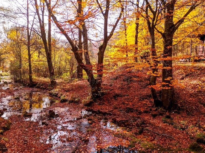 Nature park Grza near the Paracin, Serbia. royalty free stock photography