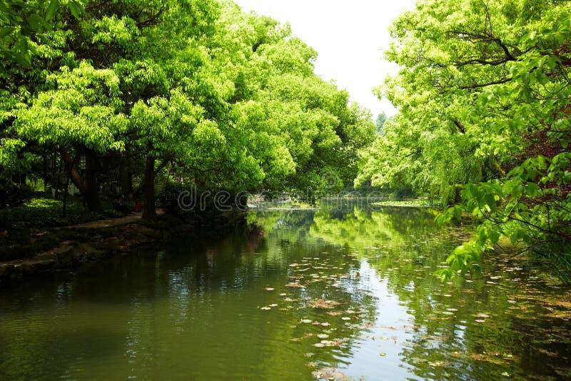 Nature park scenery, Hangzhou. Nature park scenery in spring, Hangzhou, Xihu lake, China, plants and water stock photos