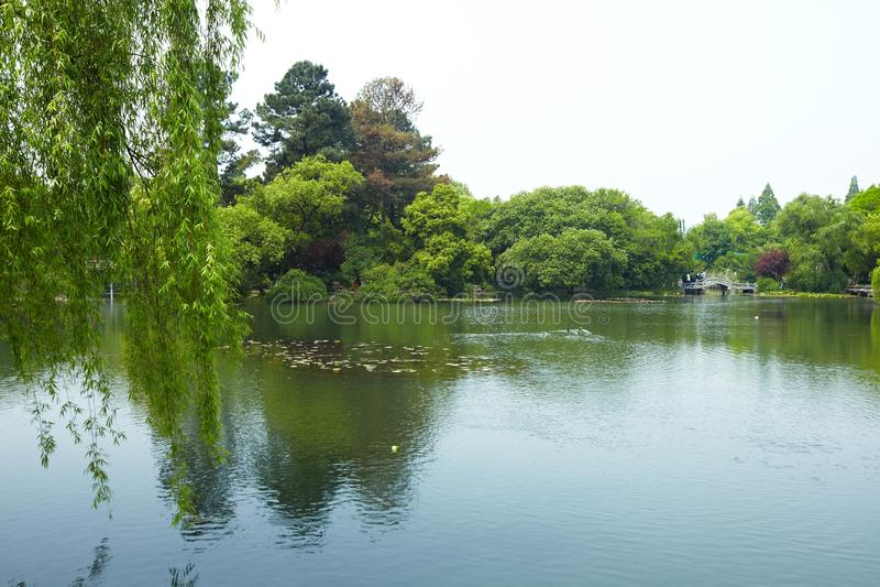 Nature park scenery, Hangzhou. Nature park scenery in spring, Hangzhou, Xihu lake, China, plants and water stock photo
