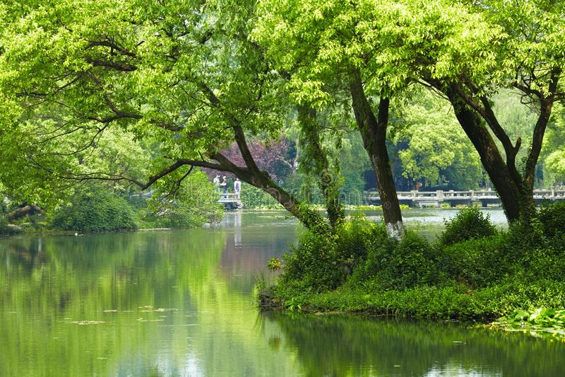 Nature park scenery, Hangzhou. Nature park scenery in spring, Hangzhou, Xihu lake, China, plants and water stock photography
