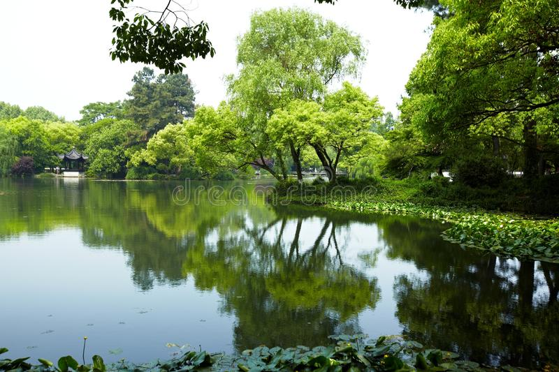Nature park scenery, Hangzhou. Nature park scenery in spring, Hangzhou, Xihu lake, China, plants and water royalty free stock images