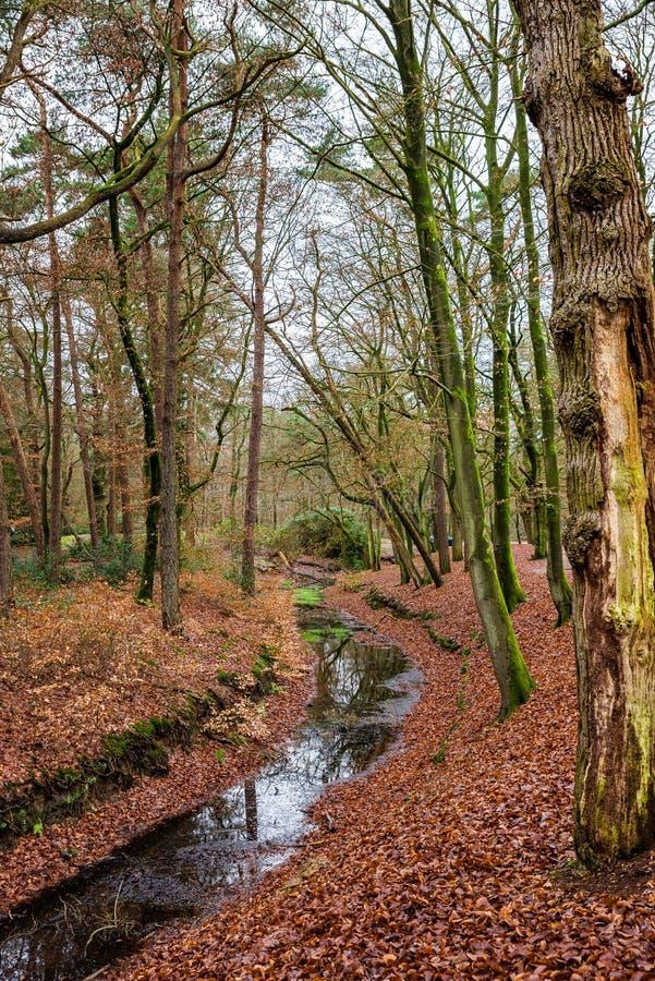 Nature park Zeisterbos around Hertenkamp in Zeist, Netherlands.  royalty free stock image