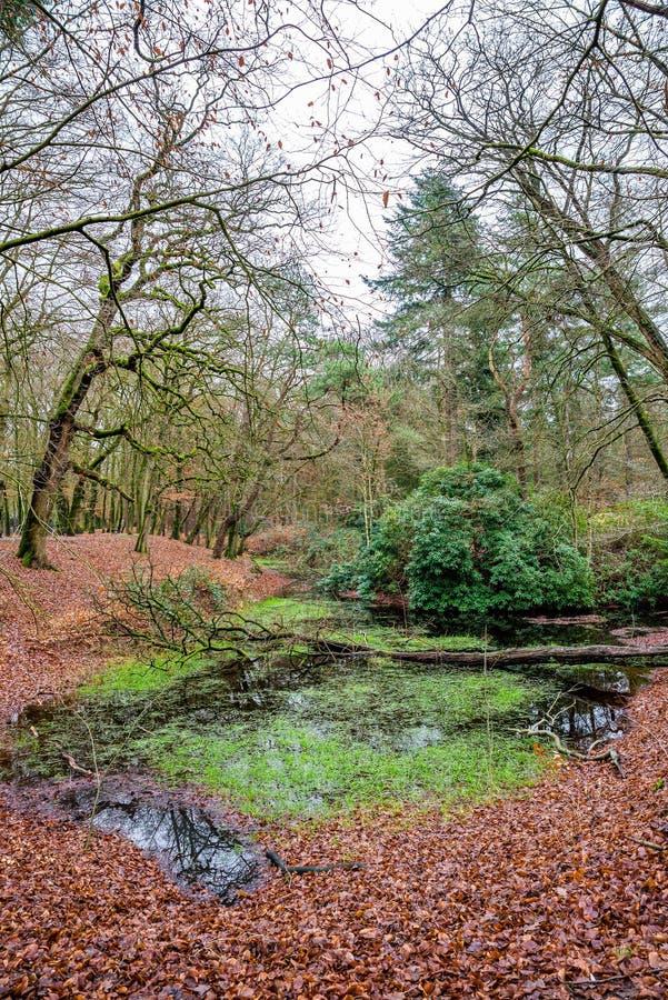 Nature park Zeisterbos around Hertenkamp in Zeist, Netherlands.  stock photo