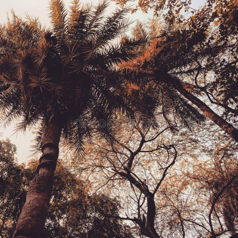 Nature& x27; passeggiata di s fotografia stock