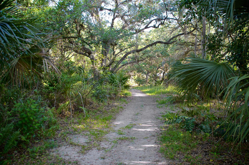 Download Nature path stock photo. Image of overgrown, dappled - 38250942