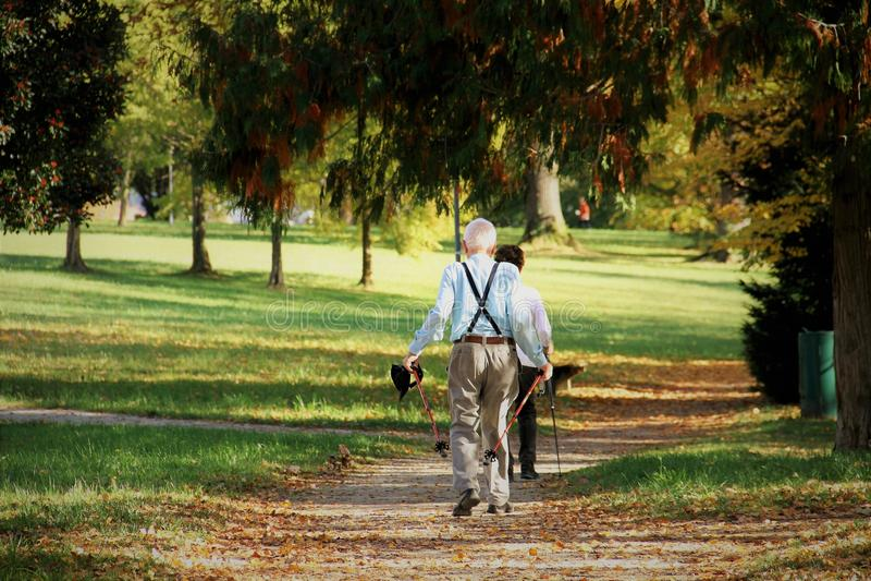 Nature, Path, Vertebrate, Tree Free Public Domain Cc0 Image