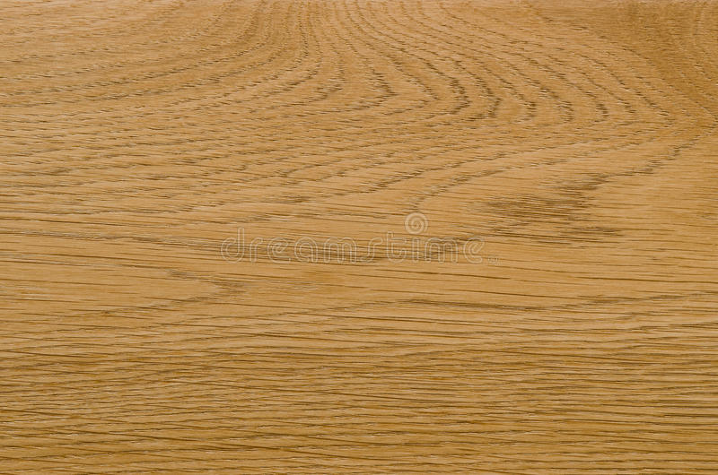 Nature pattern detail of ash wood background royalty free