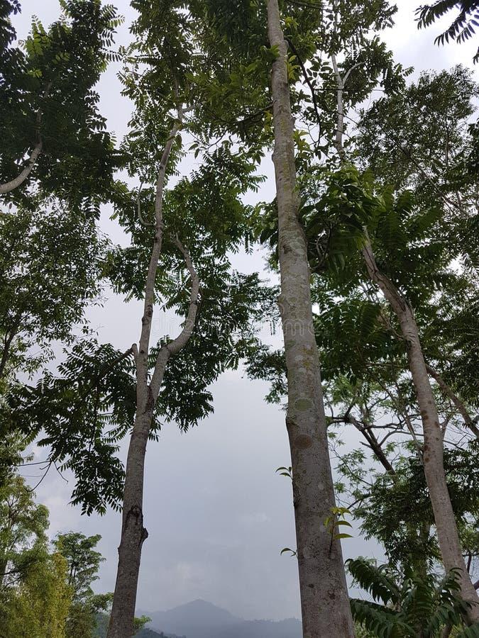 Nature peu claire photo stock