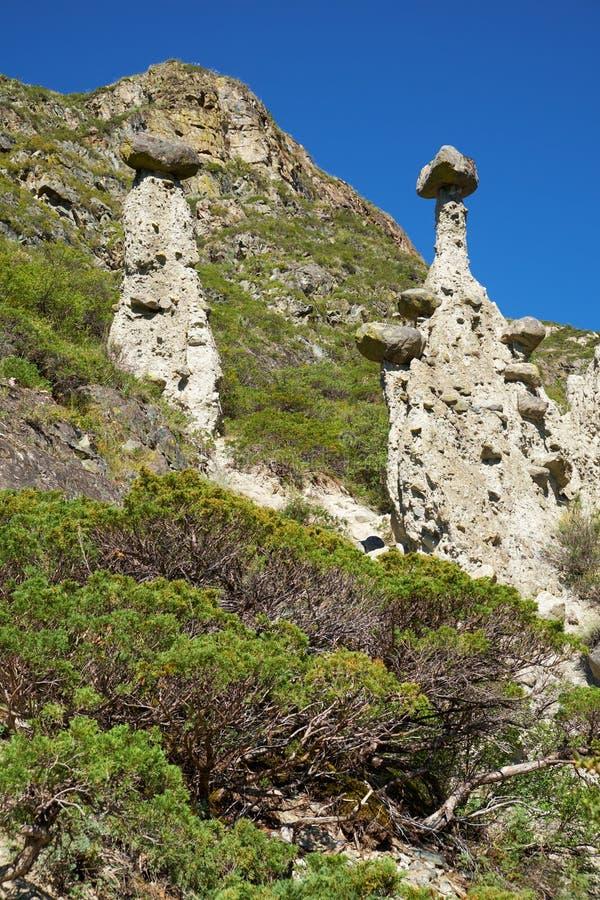 Nature phenomenon and nature miracle Stone Mushrooms rocks in Al. Tai mountains near river Chulyshman. Siberia, Russia stock image