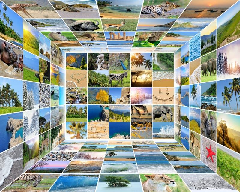 Nature photo (animal, landscape, beach). Collage background stock photography