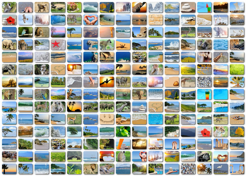 Nature photo (animal, landscape, beach). Collage background royalty free stock images