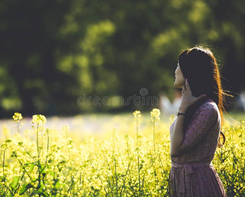Nature, Photograph, Yellow, Field royalty free stock photography