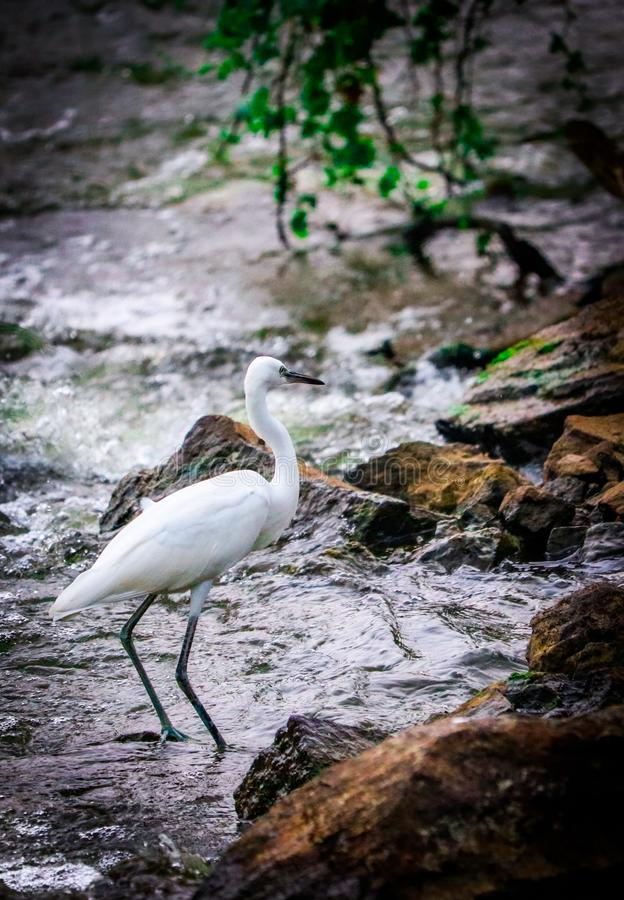 Free Nature Photography , Crane , Bird , Wildlife Royalty Free Stock Images - 164882839