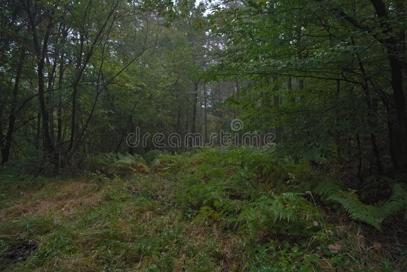 Deep in the green forest. Nature photography enviroment in the deep of a green forest stock photos