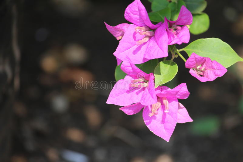 Nature Photography Pink flowers green leaves stock images
