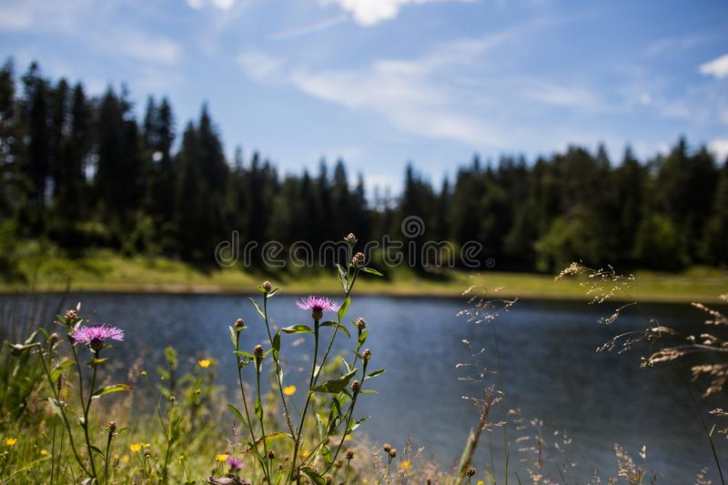 Body of water surrounded by trees royalty free stock image