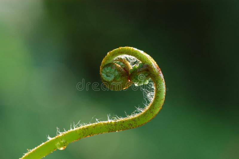 nature plant curved royalty free stock photos