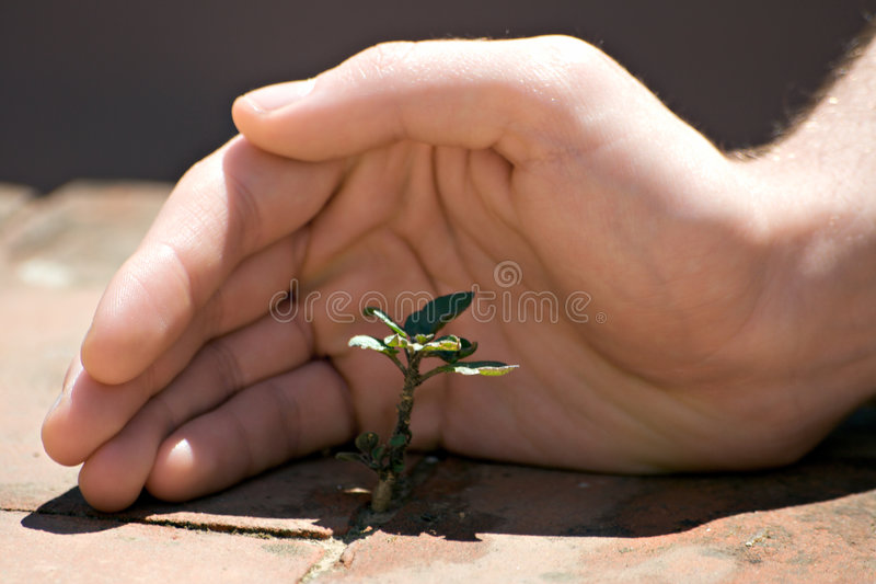 Nature Protection. Hand around a little grass tree in a hot summer day stock photos
