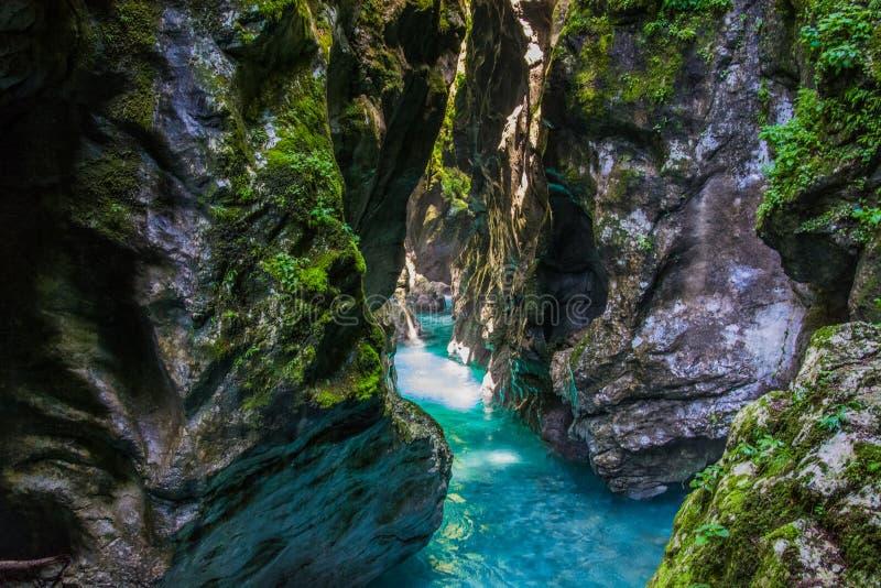 Nature pure photographie stock libre de droits