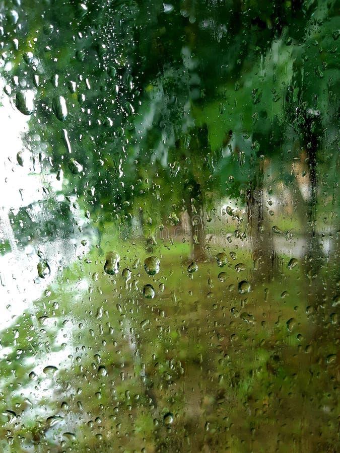 Nature rain drops stock photo